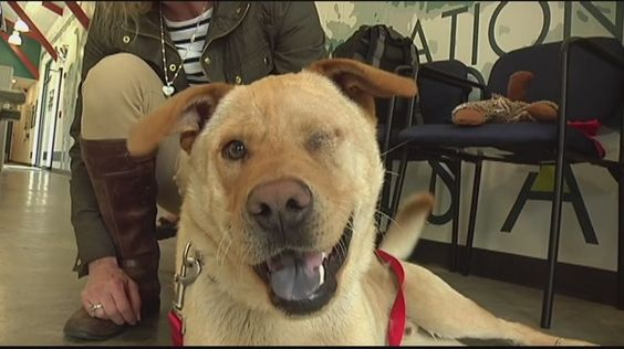 Woman travels 1,000 miles to save dog's life (Courtesy: WJBF)