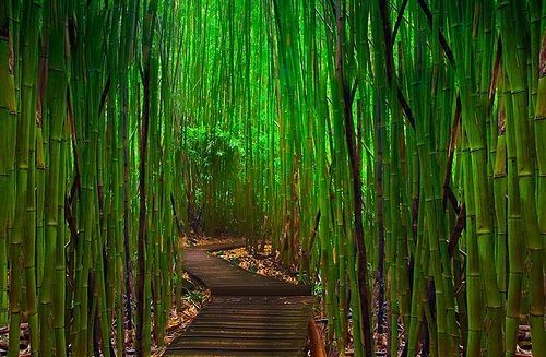 Túnel de bambú