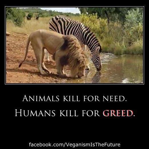 .animals kill for need. humans kill for greed.: