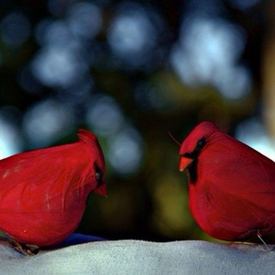 Love cardinals.