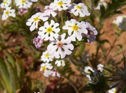 Aires protégées de la Région florale du Cap,Afrique du Sud.