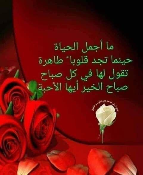 Pin By Safi Kojok On صباح الخير Studio Background Images Arabic Love Quotes Morning Wish