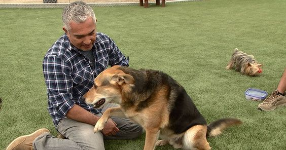 Cesar's Way | Dog training DVDs, books, articles and video tutorials by dog behavior specialist, Cesar Millan.