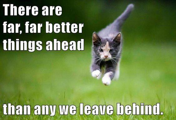 cat mental health quote