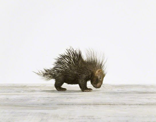 Menagerie: Sharon Montrose's Evocative, Minimalist Portraits of Animals | Brain Pickings