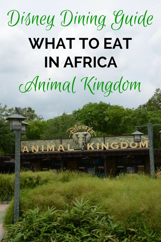 disney parks 39 animal kingdom dining options in africa disney parks