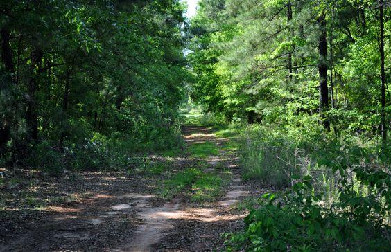Backwoods Georgia Road
