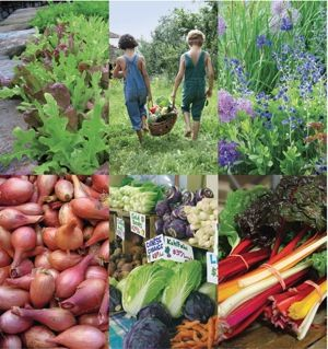 John Scheepers Kitchen Garden Seeds John Scheepers Kitchen