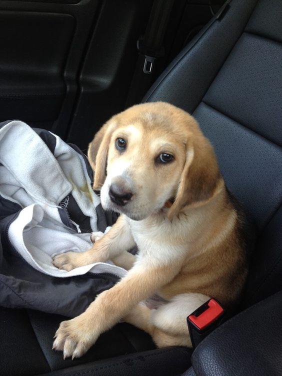 Mutt Puppy - More information