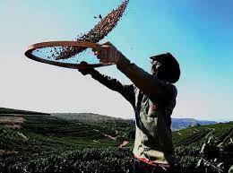 Resultado de imagem para café brasileiro