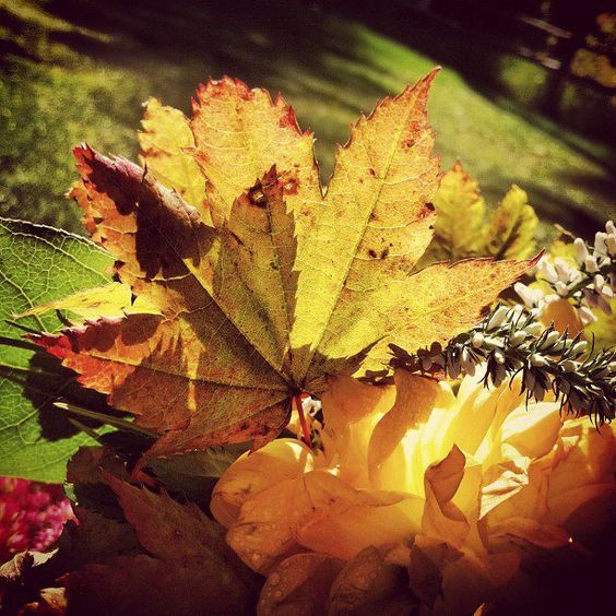 We included a few leaves in last weekend's bridesmaid bouquets.  What else is good for fall-themed bouquets?