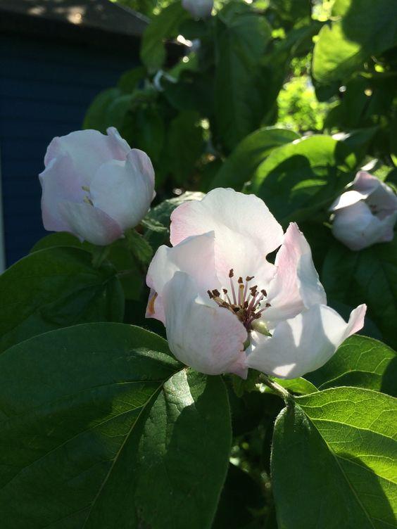 Blumengrüße 7