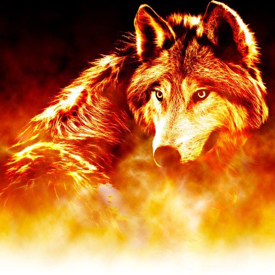 Coverbild zu Werwolf-Saga Band 2: Feuer des Verlangens