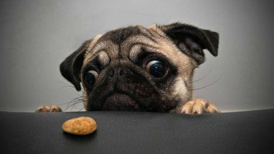 لن أأكلك فأنا أتبع نظام للرجيم الآن