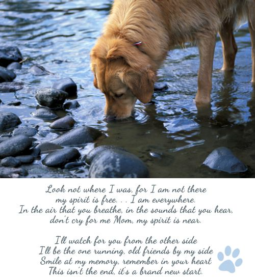 Rest in Peace Dog Poem | Rest in peace sweet KC, you will be missed!