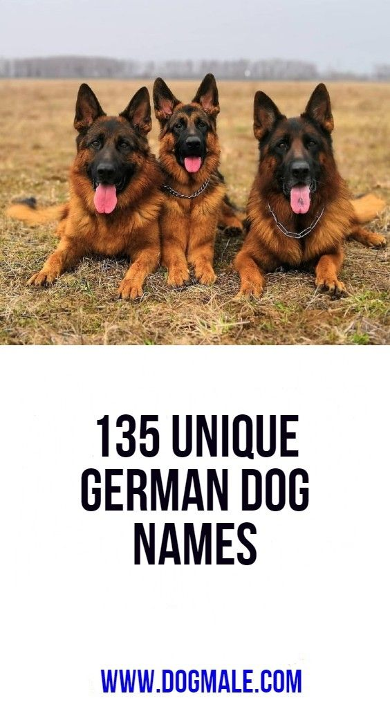 135 Unique German Dog Names German Dog Names Dog Names German Dogs