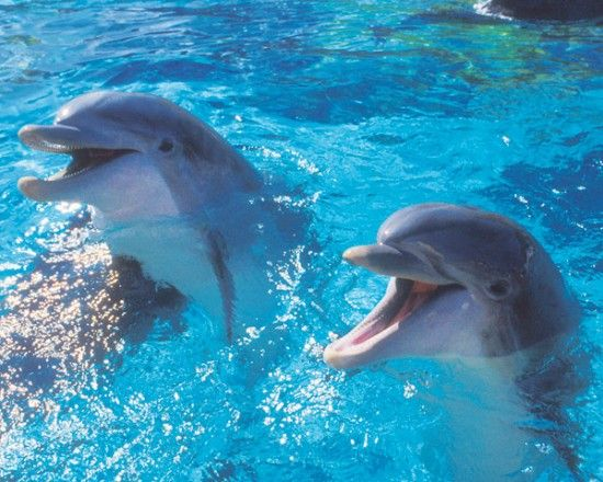 Dolphins communicate