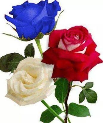 FLOWER LOVE ~~: