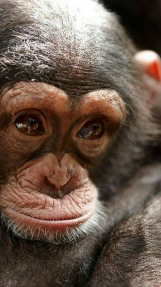 Pin Von Al Malpa Auf ᗰ Hḳɛƴs ɭyeavye ʈɧyeϻ Aɭ Hye Tiere Susse Tiere Lustige Haustiere