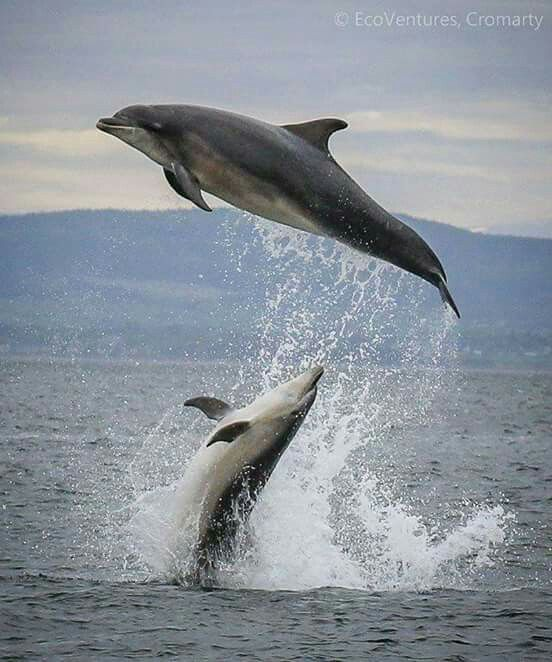 Dolphins, I am very impresed by these mammals? Got any good links for some great information?