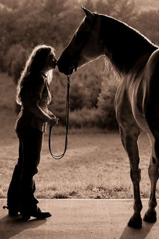 Shelley Paulson Photography | Minnesota Equine Photographer | Equine Galleries
