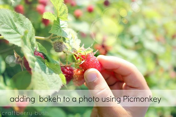 Craftberry Bush: Adding Bokeh to a Photo using Picmonkey