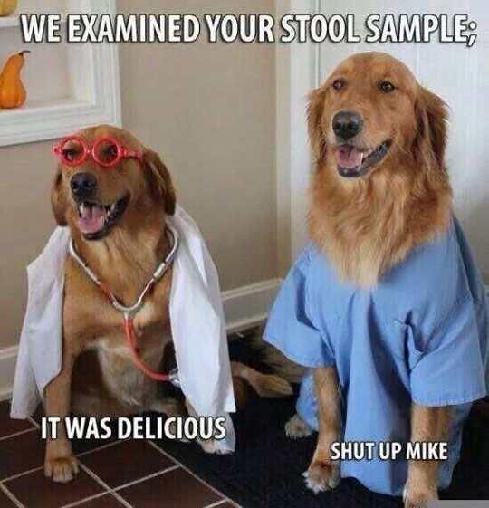 Dog meme with doctors