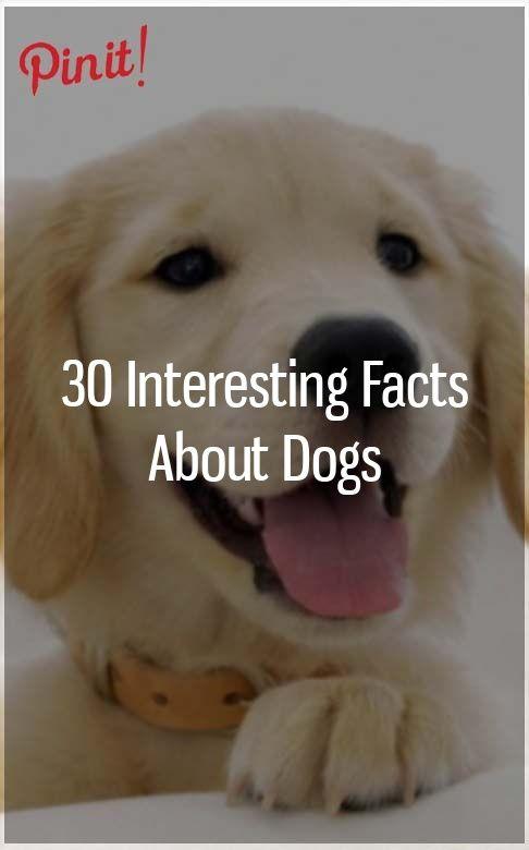 30 Interesting Facts About Dogs Best Hypoallergenic Dogs