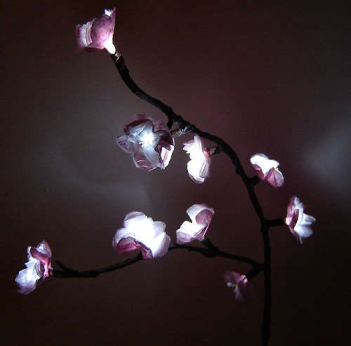 cherry blossom lights.  these are way cute