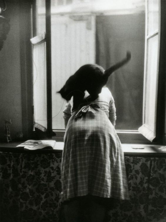 Les chats, on a beau les aimer, on en a parfois plein le dos ! / Paris, France. / By Willy Ronis, 1954).