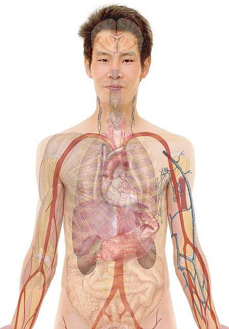 Ödeme – Wassereinlagerungen im Gewebe natürlich vorbeugen und behandeln