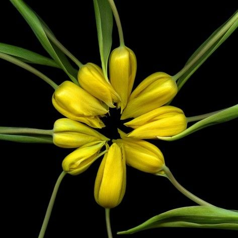 Yellow Tulips by Magda Indigo