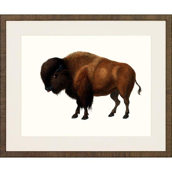 American Mammals Framed Art Print III