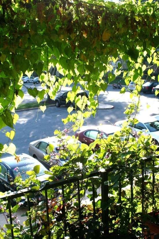 Pflanzen Balkon Ideen-sichtschutz Https://de.pinterest.com ... Balkon Sichtschutz Pflanzen Ideen