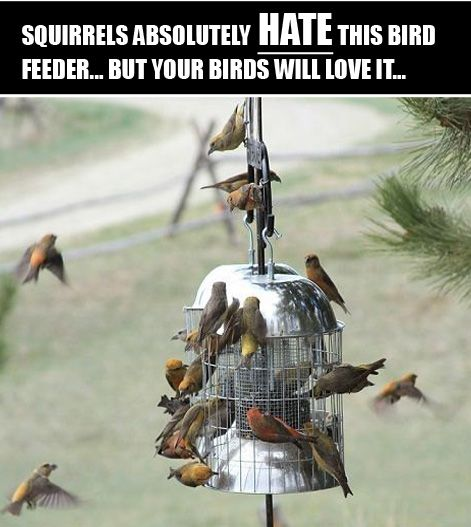 This is the best squirrel proof bird feeder we've found, and the birds in our backyard love it...