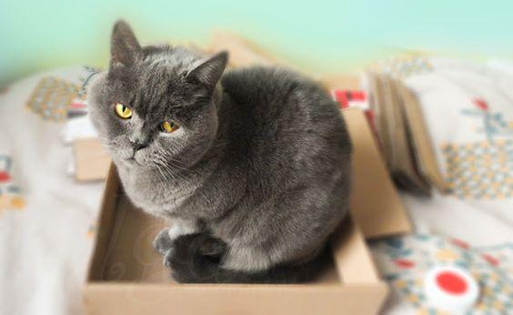 DIY-tutorial-como-hacer-un-juguete-para-gatos.rascador-para-gatos.Scratching-box-for-cats