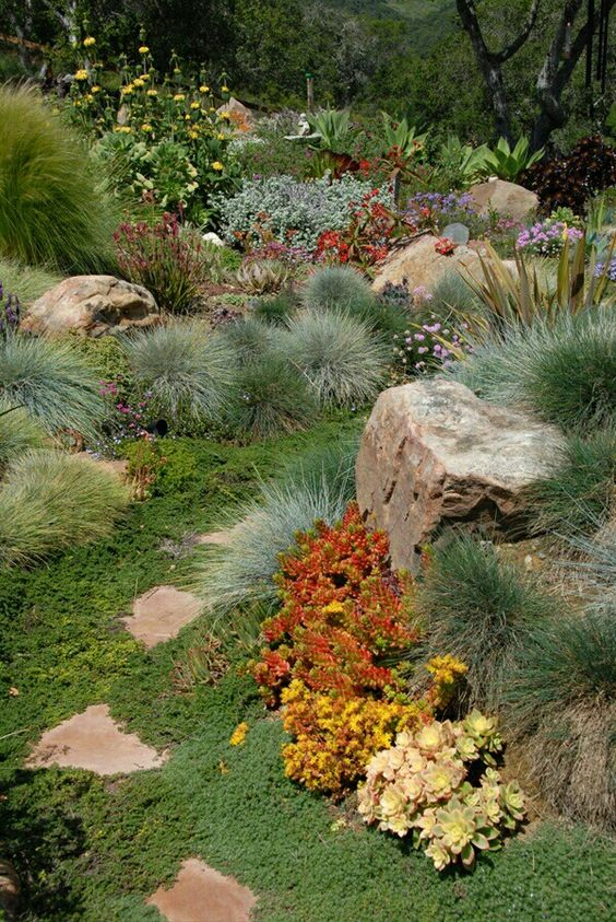 Succulents and grass gardens succulents pinterest for Natural grasses for landscaping