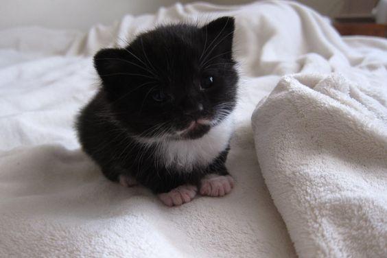 Mitten the Kitten, with a Cute Little  Mustache