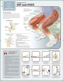Hip and Knee Exercises