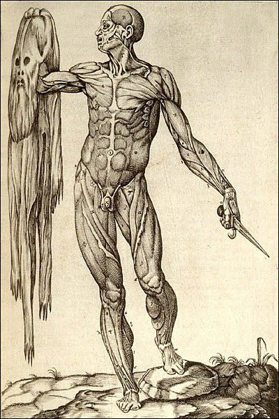 Resultado de imagen de juan valverde de amusco historia de la composición del cuerpo humano