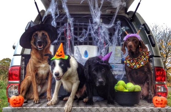 The fire dogs really went for it for #Halloween this year!