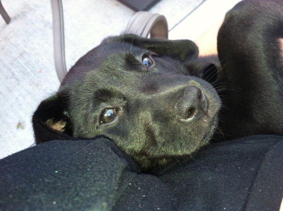 My beautiful puppy :-)