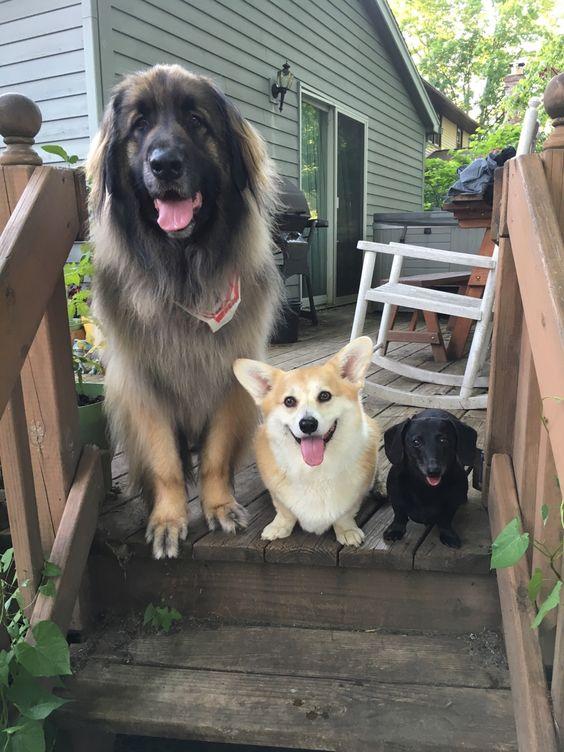 "scampthecorgi: "" Happy National Dog Day! """