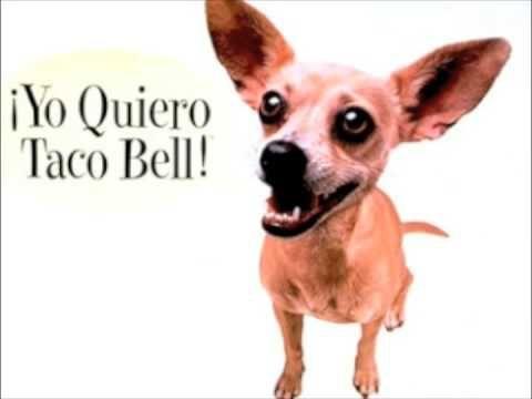 Yo Quiero Taco Bell-conjugations querer