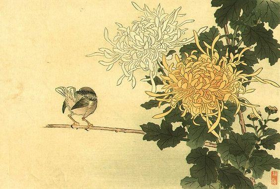 crisantemo giapponese - Cerca con Google