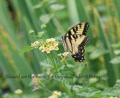 Graceful Swallowtail/Inspirational  by Karen Silvestri