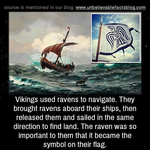 Vikings used ravens to navigate. They brought ravens aboard... - http://didyouknow.abafu.net/facts/vikings-used-ravens-to-navigate-they-brought-ravens-aboard
