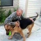 A relieved dog cries with delight when daddy comes home...