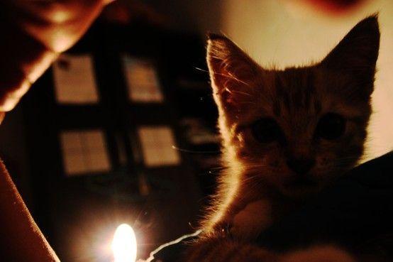 cat :3