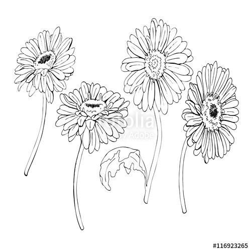 500x500 Gerbera Daisy Line Drawing Daisy Drawing Flower Drawing Drawings